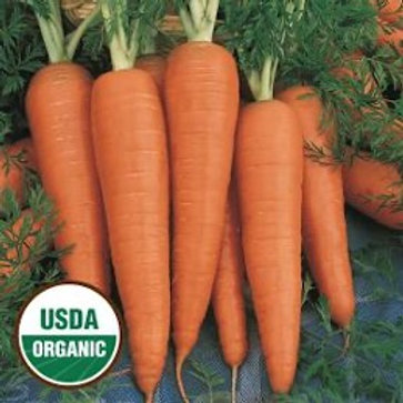 Organic Danvers (seed packets)