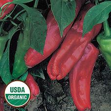 Image Marconi Red pepper.jpg