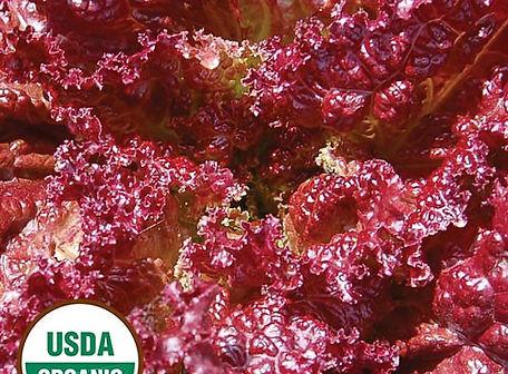Lolla Rossa Lettuce.jpg