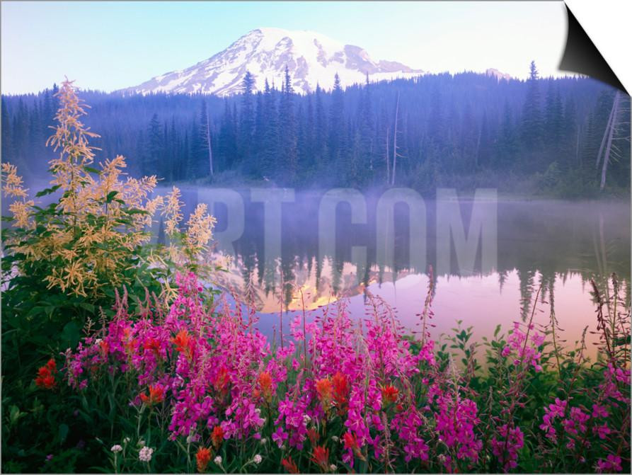 Wildflowers in Bloom by Lake on Mount Rainier sold at Art.com $39.99-Check out Art.com for more magnetic frames