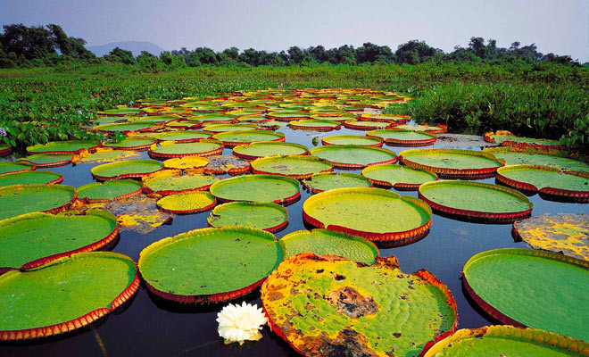 When travelling to Brazil visit the Pantanal Region Amazon