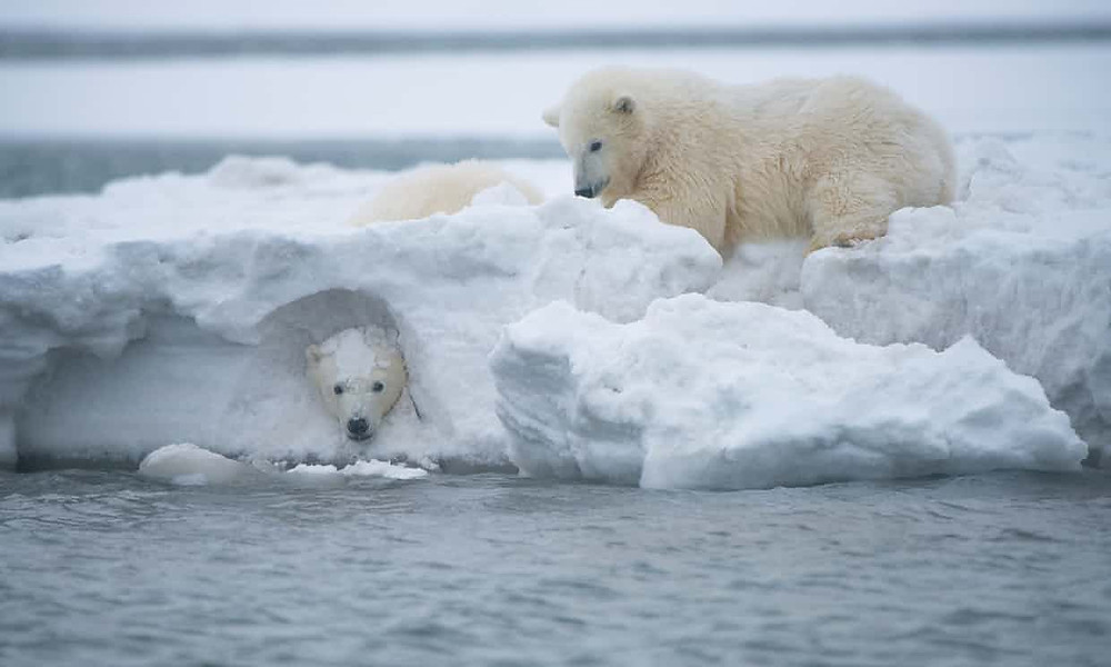 Trump officials may allow 'shaker machines' to search arctic refuge for oil - Read More from The Guardian