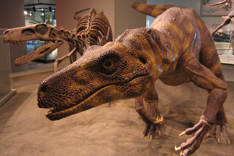 Field Museum of Natural History in Chicago, IL-This museum is better for older kids