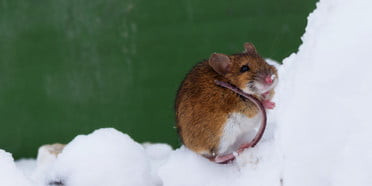 CRISPR gene editing creates cocaine-proof mice, aims to crack addiction puzzle - Read More from Digital Trends