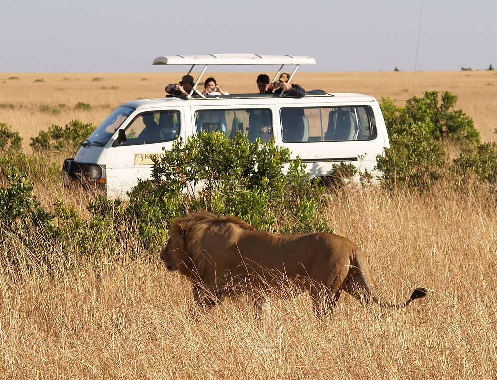 When travelling to Africa why not consider an African Safari in Duba, Botswana