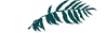 BF_DC_logo_green_edited_edited_edited_edited_edited.png