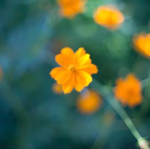 flowers - 1 (2).jpg