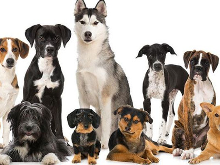 Do You Know Your Breed?