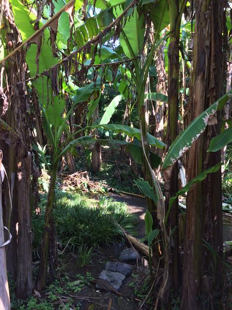 8月の芭蕉苑