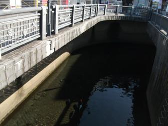 9月の藻器堀川