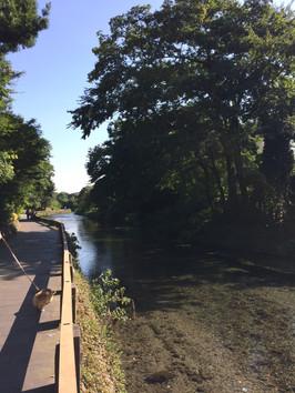 8月の藻器堀川