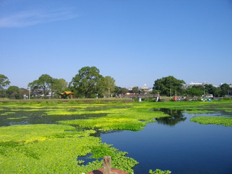 9月の水前寺江津湖公園