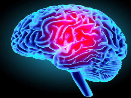 Neurosciences & Couleurs