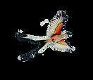 2020 scissortail logo.png
