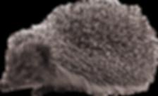hedgehog_PNG2_edited.png