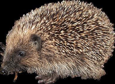 hedgehog_PNG4.png