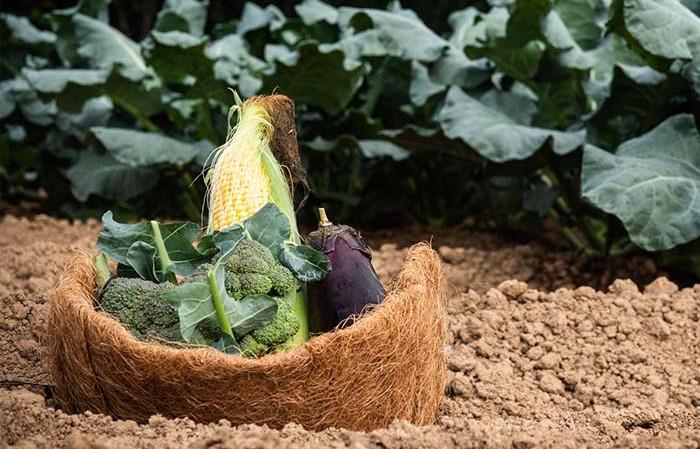 レストランで使用する野菜