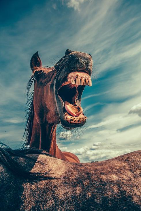 mikael kristenson laughing horse
