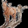 pilates mastery equine logo