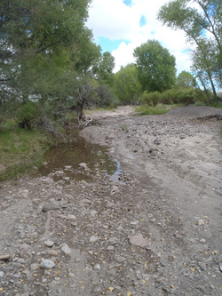 Alamito Creek perennial pool