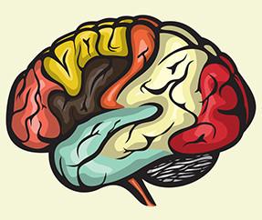 O estresse e o nosso cérebro