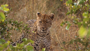SOUTH AFRICA   Safaris & Wildlife