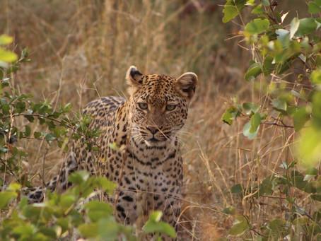 SOUTH AFRICA | Safaris & Wildlife