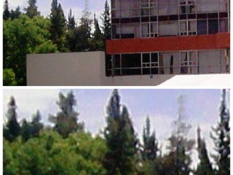 En estos días se llevara acabo los trabajos de los árboles plagados aún costado palacio de gobierno