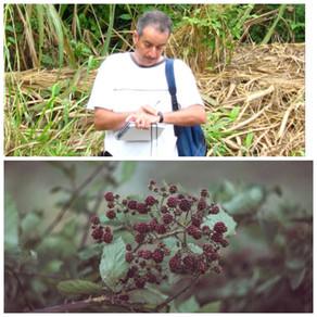 Presentó investigador de UAEH estudio internacional sobre extinción de plantas silvestres