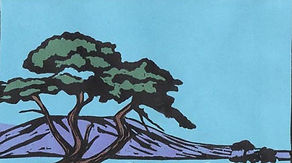 color woodcut print of old monterey cyprus in california