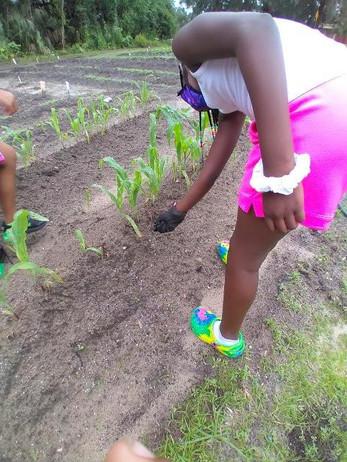 3rd grade gardening 2.jpg