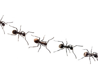 Why Can't You Get Rid Of Your Home's Ant Problem?