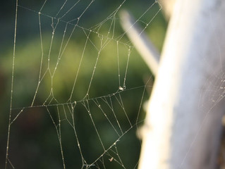 3 Ways to Make Spiders Leave Your Lake House