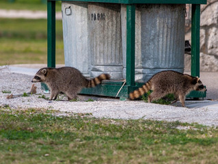 No More Mr. 'Mice' Guy: Tips for Preventing 5 Types of Rodents