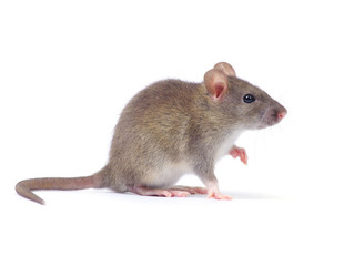 3 Food Service Strategies for Winter Rodent Control