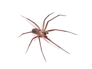 When Do You Need to Worry About a Spider Infestation?