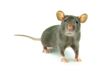 mice control MN, WI, ND, SD, IA