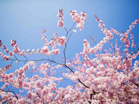 Primavera! L'elemento legno