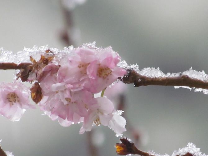 Festa della Primavera, un nuovo anno.