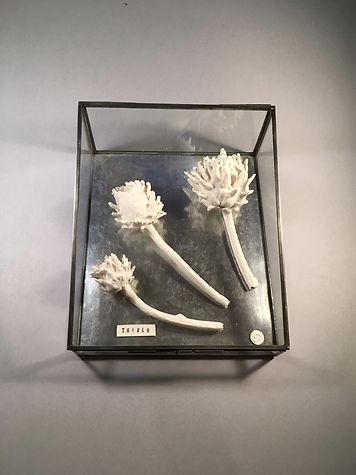Cynara Cardunculus Artichoke- Gerry Rooney