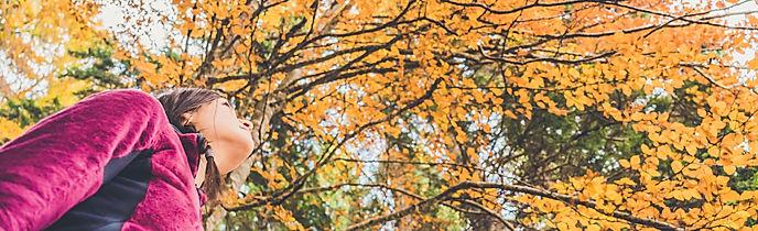 Aut_autunno_bosco_colori_sansebastiano_G