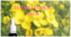 cursos terapias naturales holisticas complementarias flores de bach