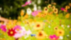 curso flores de bach online