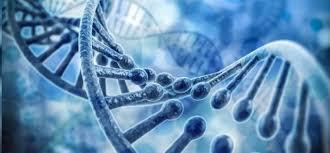 HARVARD DESCUBRE QUE LA HIPNOSIS CAMBIA NUESTRO ADN