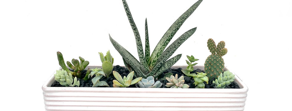 A stylish vintage trough vase filled with colourful succulents