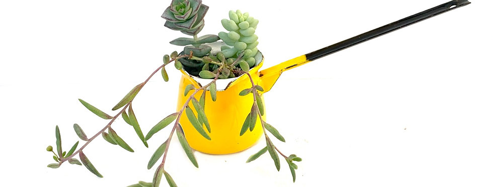 Bright yellow butter melter home to some colourful succulents
