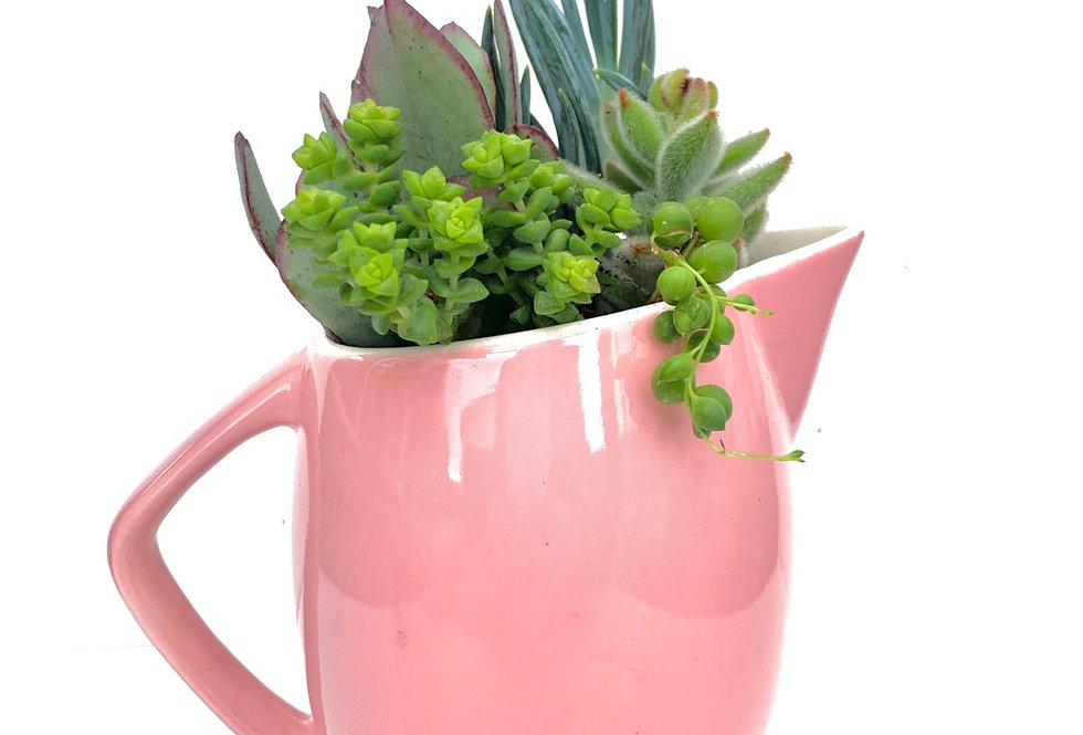 Gorgeous pink vintage jug with a selection of succulents