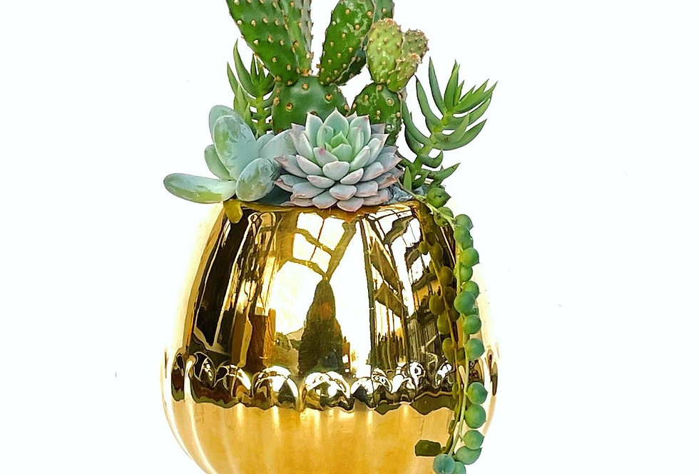 A stunning gold vintage 'Royal Winton' vase filled with succulents and cacti
