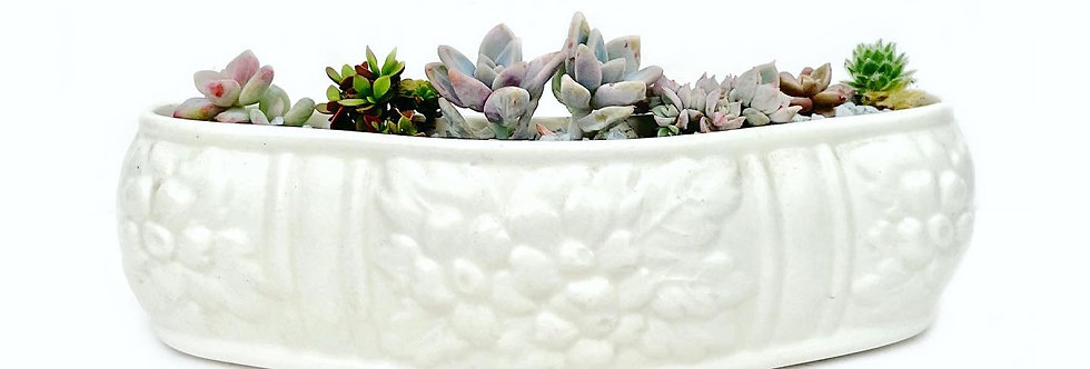 A beautiful white vintage Spode vase filled with colourful succulents