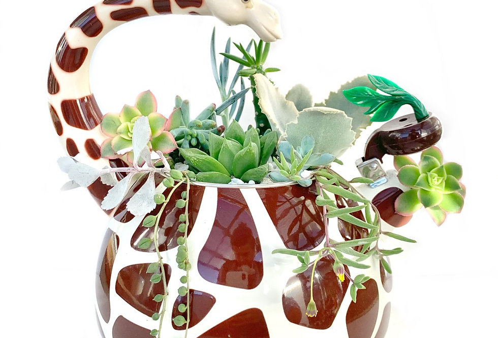 A gorgeous giraffe enamel teapot filled with colourful succulents